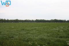 IMG_3061_05-19-2012