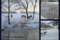 Winter_in_Westerhaar_januari_2010