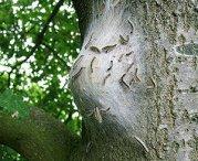 nest-processierups1-240408.jpg